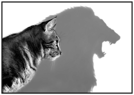 House cat casting a shadow of a lion
