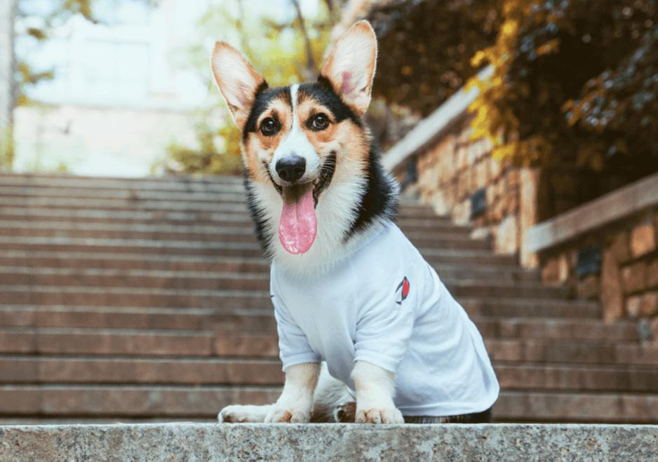 good email roi dog