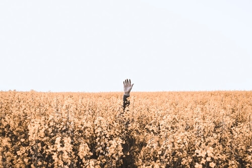 hand sticking out of a field