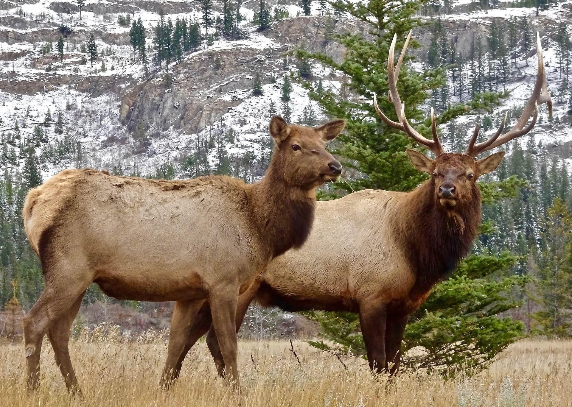 The Rocky Mountain Elk Foundation